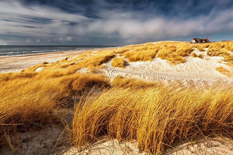 Dünenlandschaft (Henne Strand)