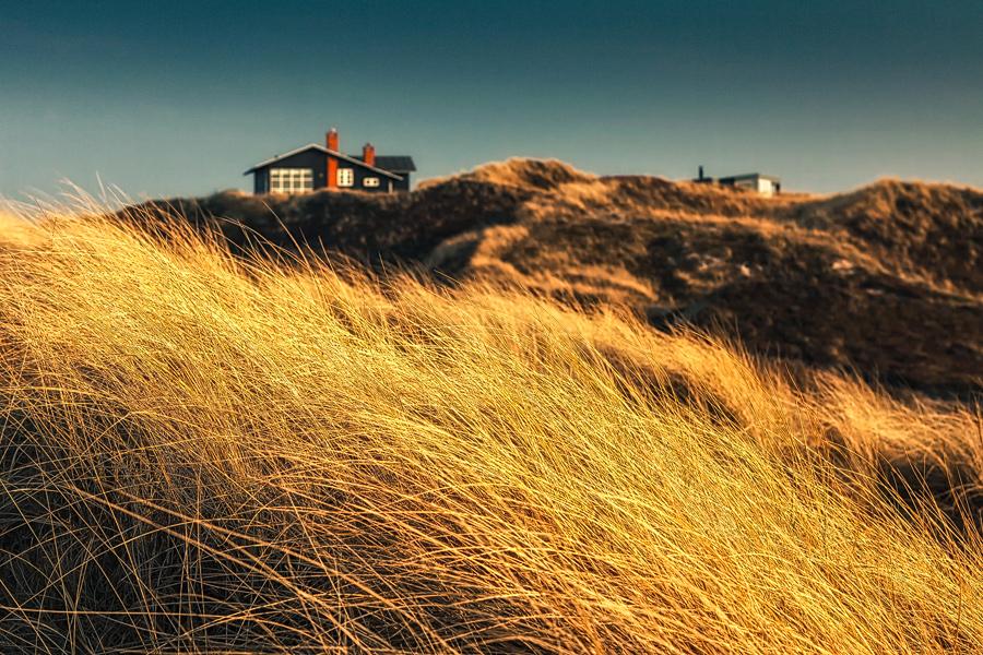 Goldenes Gras (Henne Strand)